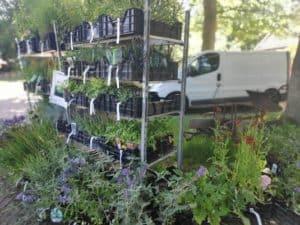 Plantenkraam Uffelte