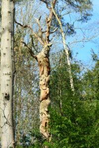 bijzonder houtsnijwerk