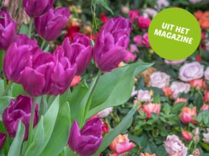 tulpen en rozen