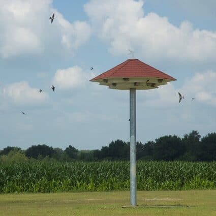 huiszwaluwtil vogelwacht uffelte
