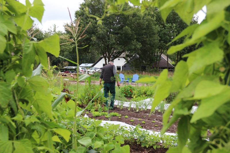 Sociale voedseltuin De Pluimerije